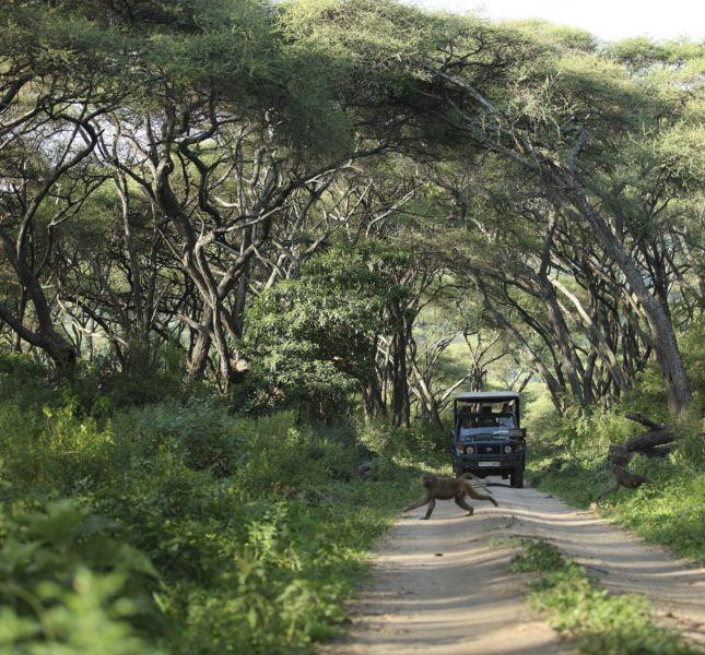 Manyara Tree Lodge 2014 57