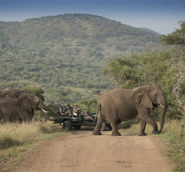 Game Drives In Phinda