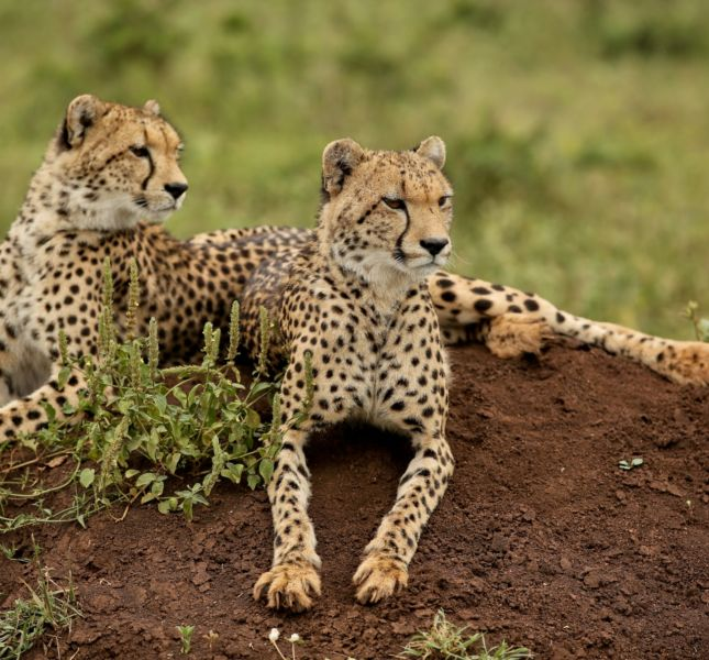 Wildlife At Phinda Private Game Reserve 14