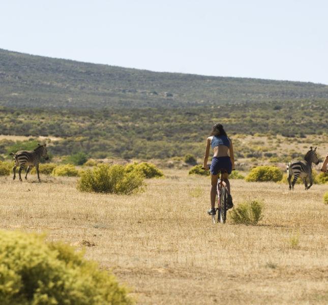 Bk Cycling 008 S1