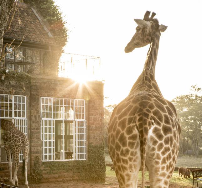 Giraffe Manor Beautiful Behind