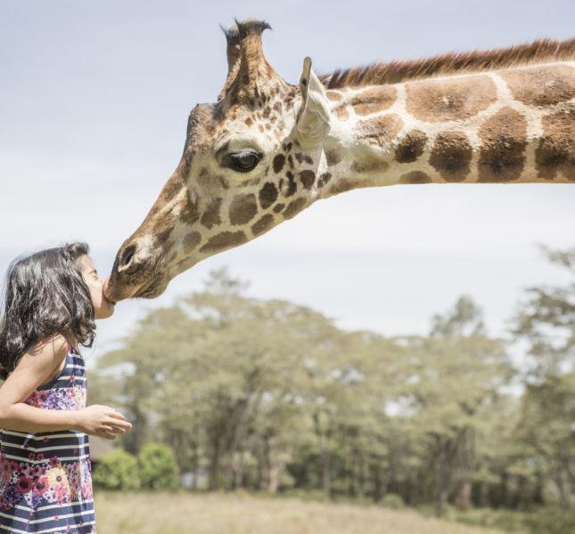 Giraffe Manor Kiss