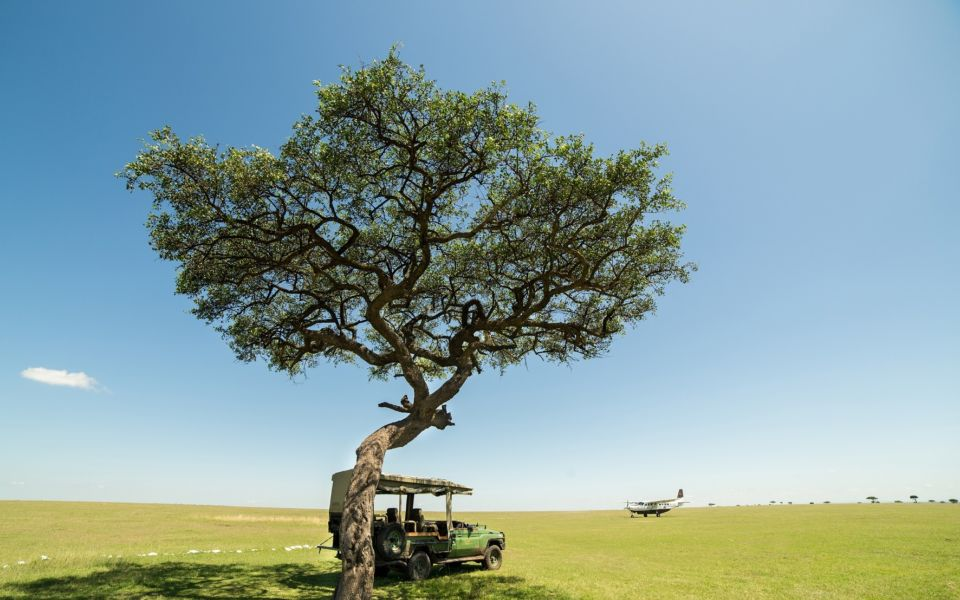 Mara Plains Tree Resized For Web