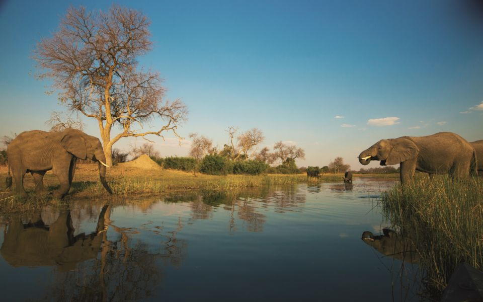Copyright Beverly Joubert Selinda Exploreres Wildlife Botswana 4530