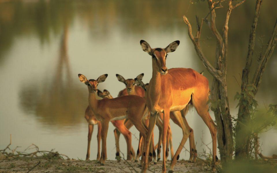 Copyright Beverly Joubert Selinda Exploreres Wildlife Botswana 4540