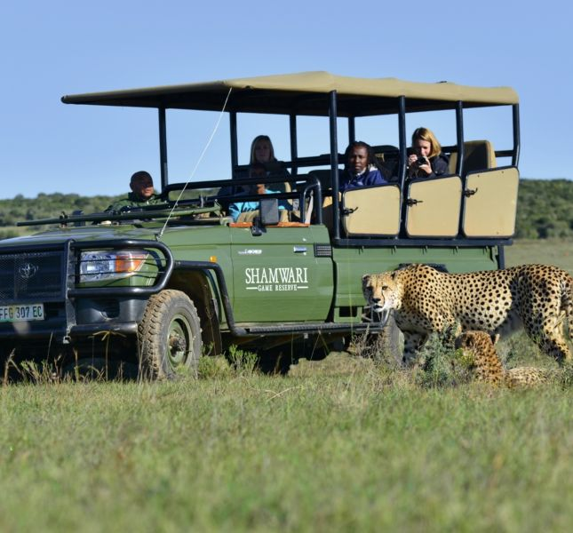 Shamwari Game Drive Cheetah